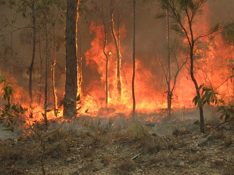 Bush fire at Captain Creek central Queensland Australia.